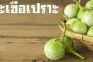 ต้านเบาหวาน ลดน้ำตาลในเลือด ด้วยมะเขือเปราะผักพื้นบ้าน