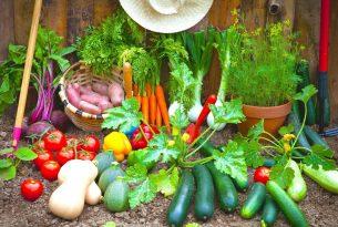 ปลูกผักอะไรดีในพื้นที่เล็กๆ