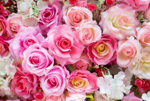 ความหมายของกุหลาบแต่ละสีและจำนวนดอกกุหลาบ
