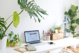 มาเพิ่มพื้นที่สีเขียวบนโต๊ะทำงานกันเถอะ