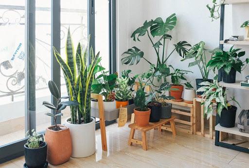 ต้นไม้น่าปลูกภายในบ้าน ช่วยฟอกอากาศภายและดูดสารพิษ